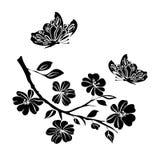 Flores de cerejeira e borboletas do galho Foto de Stock