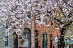 Flores de cerejeira e casas de fileira em Patterson Park, Baltimore, Maryland fotos de stock royalty free