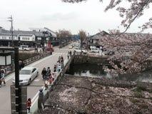 Flores de cerejeira em Hikone Foto de Stock