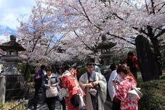 Flores de cerejeira, Kiyomizudera, Japão fotos de stock royalty free