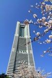 Flores de cerejeira na avenida do dori de Sakura em Yokohama imagem de stock