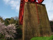 Flores de cerejeira na cidade de Nebukawa Fotos de Stock