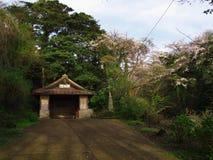 Flores de cerejeira na cidade de Nebukawa Foto de Stock