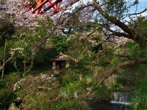 Flores de cerejeira na cidade de Nebukawa Foto de Stock Royalty Free