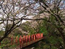 Flores de cerejeira na cidade de Nebukawa Fotografia de Stock Royalty Free