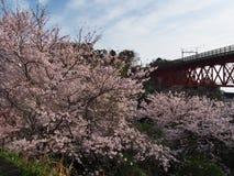 Flores de cerejeira na cidade de Nebukawa Fotos de Stock Royalty Free