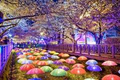 Flores de cerejeira na noite, cidade de busan em Coreia do Sul imagens de stock