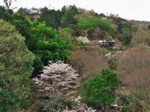 Flores de cerejeira no lago Matukawa Fotografia de Stock