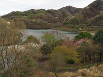 Flores de cerejeira no lago Matukawa Foto de Stock Royalty Free