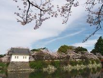 Flores de cerejeira no parque do castelo Imagens de Stock
