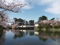 Flores de cerejeira no parque do castelo Foto de Stock