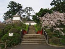 Flores de cerejeira no parque do castelo Foto de Stock Royalty Free