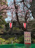 Flores de cerejeira no parque de Ueno, T?quio, Jap?o imagens de stock royalty free