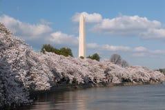 Flores de cereza Fotografía de archivo libre de regalías