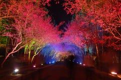 Flores de cereza de la noche Imagenes de archivo
