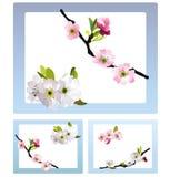 Flores de cereza frágiles Foto de archivo