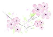 Flores de cereza rosados - diseño de la flor stock de ilustración