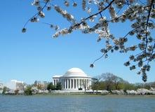 Flores de cereza y monumento 2010 de Jefferson Imagenes de archivo