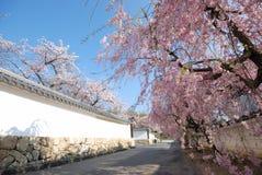 Flores de cereza y pared blanca del templo en Kyoto Fotos de archivo libres de regalías