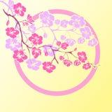 Flores de cerezo de la ramita Fotos de archivo libres de regalías