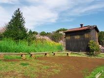 Flores de cerezo en el castillo de Ichiya de las ruinas Imagen de archivo