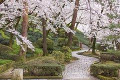 Flores de cerezo en el jardín público Imagen de archivo