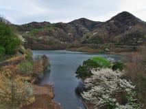 Flores de cerezo en el lago Matukawa Foto de archivo libre de regalías
