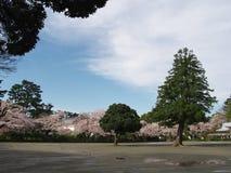 Flores de cerezo en el parque del castillo Imagenes de archivo
