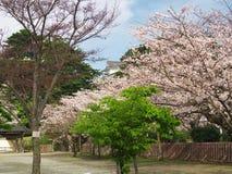 Flores de cerezo en el parque del castillo Imágenes de archivo libres de regalías