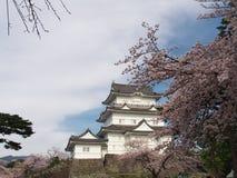 Flores de cerezo en el parque del castillo Fotografía de archivo