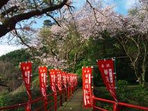 Flores de cerezo en la ciudad de Nebukawa Imagen de archivo libre de regalías