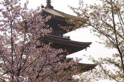 Flores de cerezo en la floración Imágenes de archivo libres de regalías
