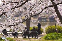 Flores de cerezo en la floración Fotografía de archivo libre de regalías