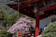Flores de cerezo en primavera fotografía de archivo