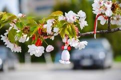 Flores de cerezo hermosas adornadas Fotos de archivo libres de regalías