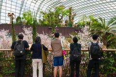 Flores de cerezo de la primavera en los jardines por la bahía foto de archivo libre de regalías