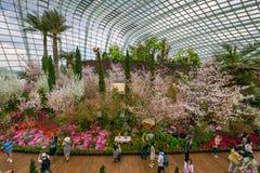 Flores de cerezo de la primavera en los jardines por la bahía imagen de archivo