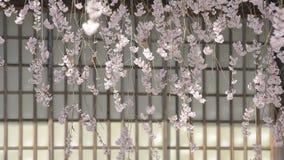 Flores de cerezo que lloran almacen de video