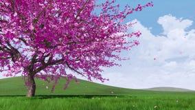 Flores de cerezo de Sakura del borrachín con los pétalos que caen 4K ilustración del vector