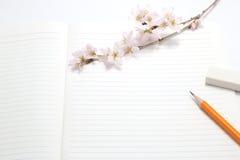 Flores de cerezo y utensilios de la escritura Imagen de archivo