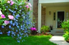 Flores de cesta colgantes coloridas Foto de archivo libre de regalías