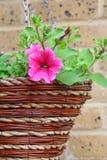 Flores de cesta de la ejecución Imagen de archivo
