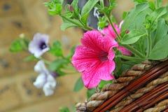 Flores de cesta de la ejecución Imágenes de archivo libres de regalías