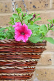 Flores de cesta de suspensão Imagem de Stock