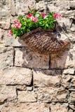Flores de cesta que penduram em pedras velhas de uma parede de tijolo Fotografia de Stock Royalty Free