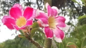 Flores de Colorfull foto de archivo