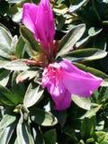Flores de Colorfull imagem de stock royalty free