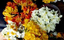 Flores de Colorfull no mercado de Bayloni em Belgrado 2 fotografia de stock royalty free