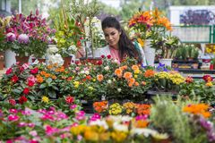 Flores de compra da jovem mulher Foto de Stock Royalty Free