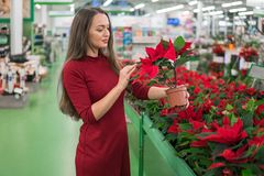 Flores de compra da mulher bonita no florista Momentos felizes das mulheres Fotos de Stock Royalty Free